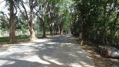 パ・アック フォレスト・メディテーションセンター 林道 写真 Pa-Auk Forest Meditation Center forest road photo