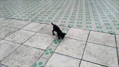 モーラミャインのパゴダ、猫がいっぱい