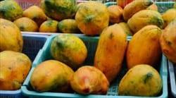 パパイヤ、papaya, Myanmar Travel Information. myanmar-travel.info、Mawlamyine